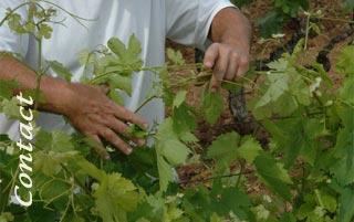 Contacter le Domaine de Terrebrune - Trouver le bon domaine viticole de Bandol - Acheter de bons vins de Bandol