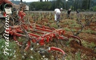 Les traditions viticoles donnent de grands vins : le domaine de terrebrune un terroir de bandol authentique et biologique