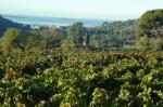 Le vignoble de Terrebrune |