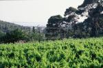 La vue depuis les vignes du domaine