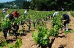 Vignoble et viticulture |