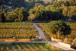 Vue surplombant l'entrée du domaine viticole de Bandol